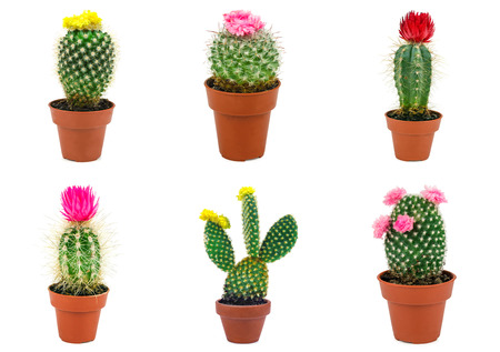 different types of cactus isolated on white background stock photo