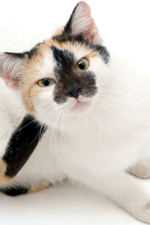 splotchy: Cat  Stock Photo