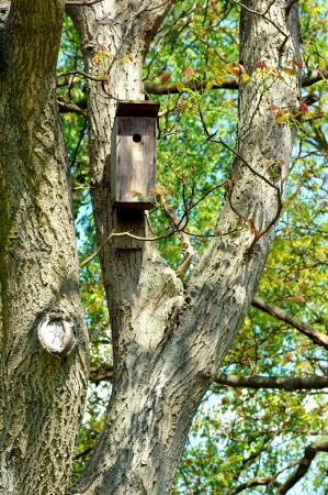 woodsy: Birdhouse hanging on an old tree  Stock Photo