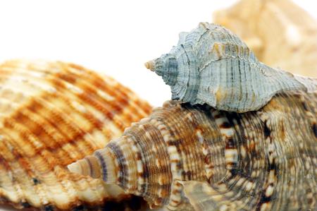 journeying: Seashell Stock Photo