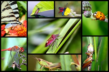 lepidopteran: In the world of insects-collage  Stock Photo