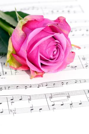 バラと音楽 写真素材