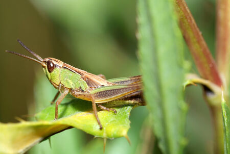timidity: Locust to leaf