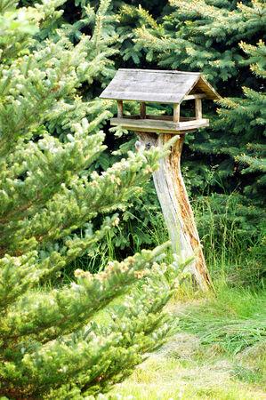 woodsy: Bird feeder between coniferous trees
