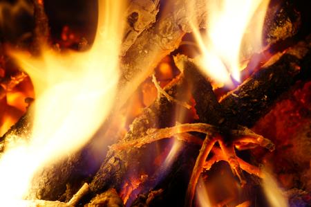 blazed: Burning wood from the tree