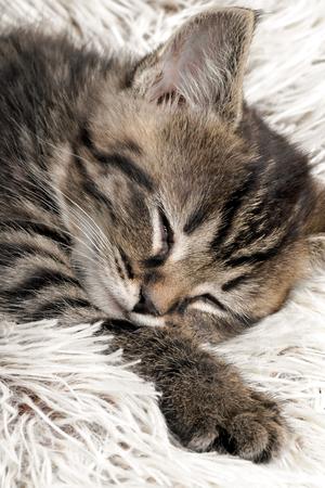 mottle: Cat in the rest.