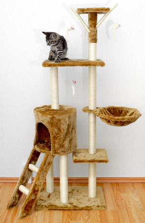 scratcher: Climbing scratcher for cats.