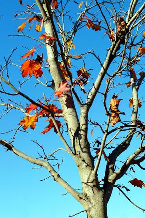woodsy: Autumn tree branch.,