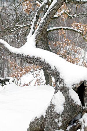 sylvan: Winter in the woods Stock Photo