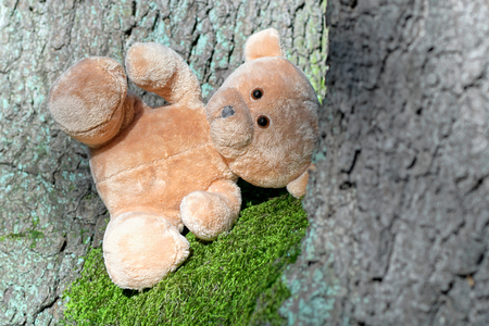 Teddy bear in the woods among the trees.