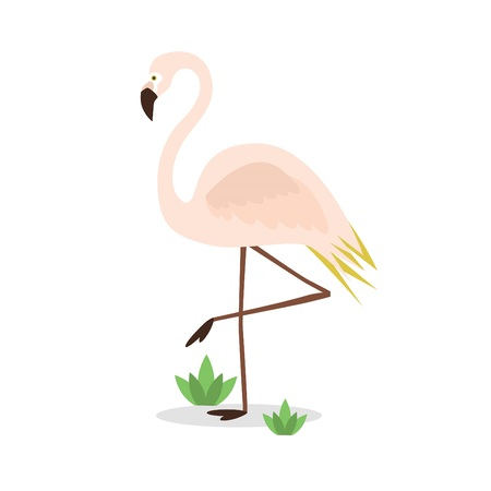 Beautiful abstract single pink flamingo standing on one leg on white background