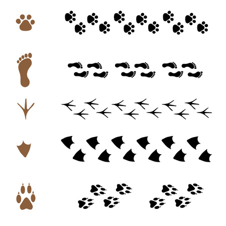 animal tracks: set of vector pattern brushes in the form of animal tracks