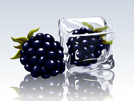 refrigerate: frozen blackberry in ice cube Illustration