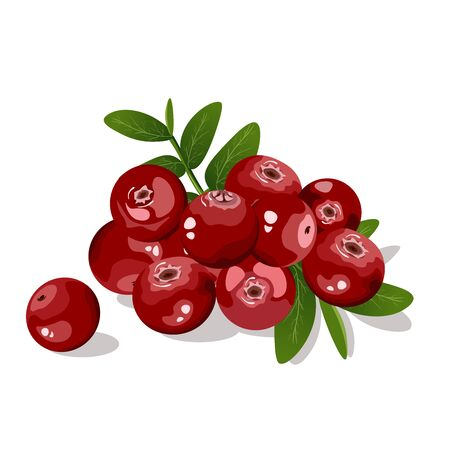 Cranberry with leaves isolated on white background.