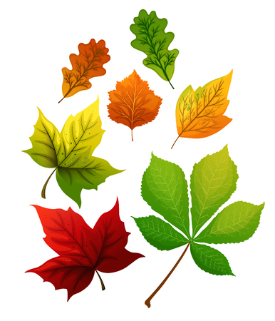 Colorful autumn leaves set. Vector illustration.