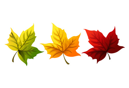 Colorful maple leaves. Vector illustration. Иллюстрация