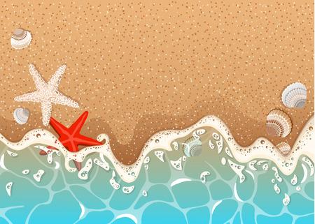 Vague mousseuse, étoiles de mer et coquillages.