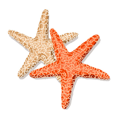 Starfish isolated on white background. Vector illustration.