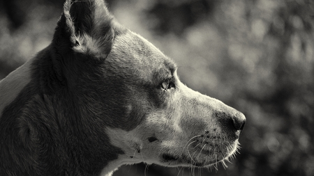 pooches: Serious dog