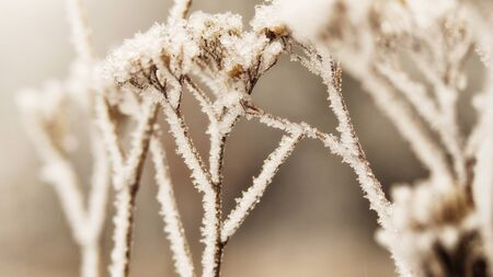 frosty nature Stock Photo