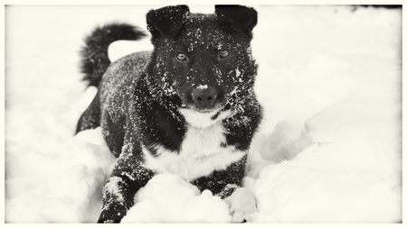 pooches: cute dog sitting in the snow Stock Photo