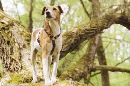 pooches: adorable dog feeling nature