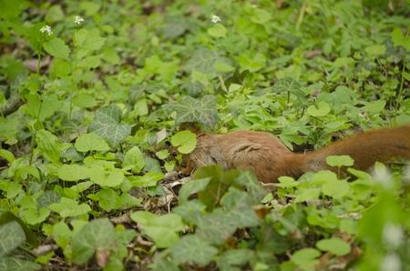 squirrel in nature