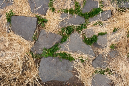stone path in the green grass and dry grass Stock Photo