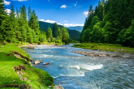 medio ambiente: paisaje con árboles de las montañas y un río en frente