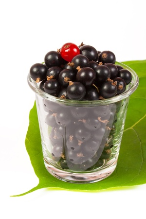 black currants in a glass  on the big green leaf Stock Photo