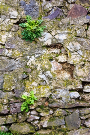 wall of sharp stones with sprouted grass photo