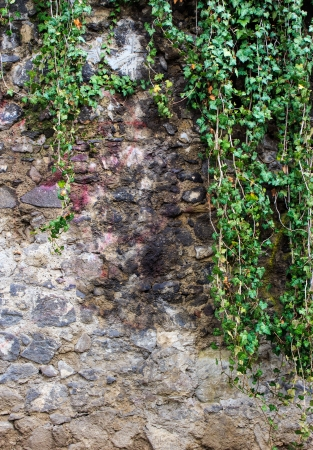 wall made of river stones with hanging ivy photo
