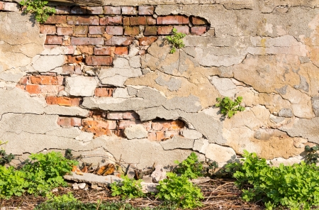 brick wall with chipped plaster and green grass photo