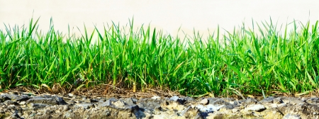 fresh green grass growing out of stone on a light background