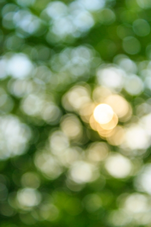 natural ecological blur bokeh of fresh spring foliage of tree crowns in the daytime Stock Photo