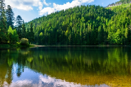 calm clear lake in the mountains of pine trees planted in fine summer weather
