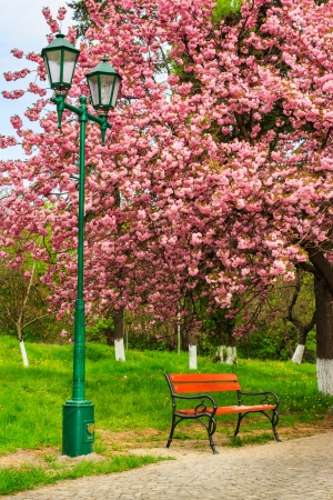 City lights and shop on the pavement in the park on a background of grass and sakura wood Stock Photo