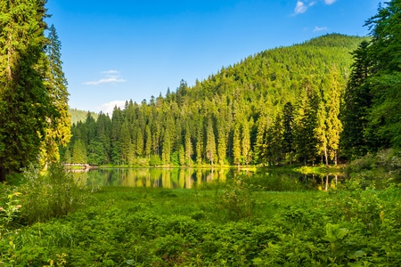 Forest reflection on the water surface of the lake on the background of mountains Stock Photo