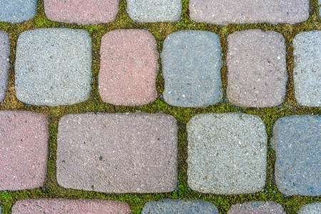 colored cobbles paved inside of moss