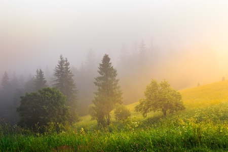 sun rays make their way through the fog to the trees photo