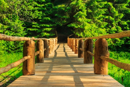 horisontal wooden bridge in the morning sun disappearing into the depths of coniferous forest