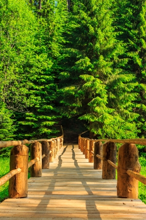 vertical wooden bridge in the morning sun disappearing into the depths of coniferous forest