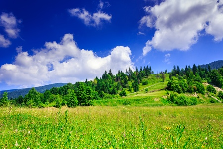 green lawn with mountain herbs and a small hill with trees under a beautiful summer sky with clouds