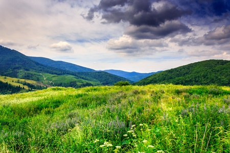 huge meadow with herbs in the mountains after the rain