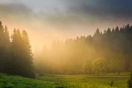 rays of the morning sun breaking through the clouds and fog to the clearing of coniferous forests photo