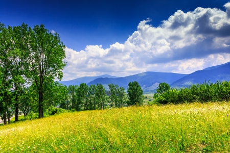 large meadow with mountain herbs and a few deciduous trees and shrubs in the foreground. clouds over the mountainous massif away in the background. good weather on a nice summer day
