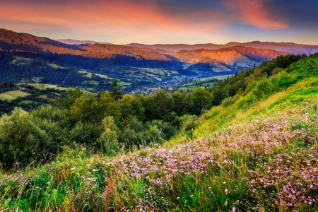 Savory among the grass on the hillside cool early morning photo