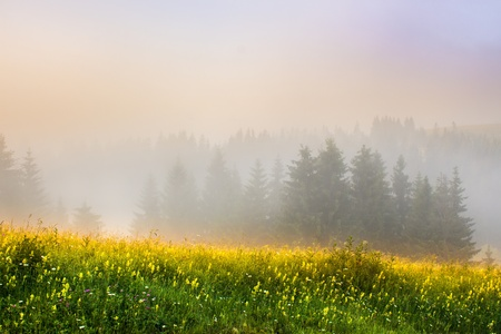 meadow with mountain herbs and trees in the fog