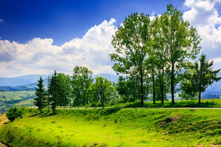 tall trees near the meadow and  highway in mountain