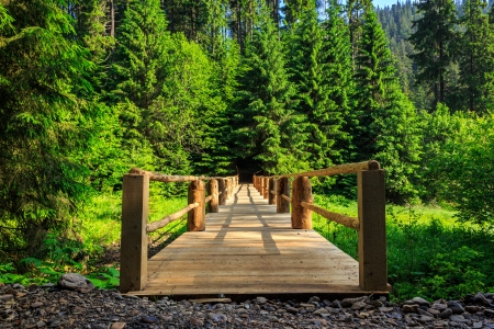 wooden bridge stretching into the depths of the forest horizontal Stock Photo